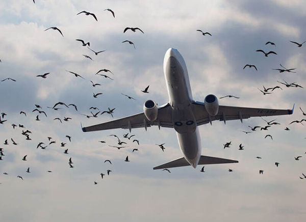 پرواز گرگان - مشهد دچار اختلال شد / تمام سر نشینان و خدمه در سلامت کامل هستند