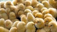 ساماندهی قیمت جوجه یکروزه در گلستان با ورود قرارگاه 17 ربیع/ وضعیت تنظیم بازار مرغ باید اصلاح شود