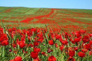 پنجمین جشنواره «شقایقها» در روستای «پادلدل» گالیکش برگزار میشود