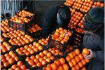 توزیع یکهزار تن میوه شب عید در گلستان