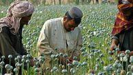 تجهیز 5 گمرک کشور به «ایکس ری» پرسرعت/ افغانستان همچنان بزرگترین تولیدکننده مواد مخدر دنیا