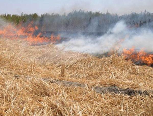 90هکتار از اراضی زراعی آق قلا در آتش سوخت