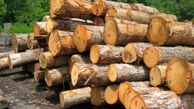 محکومیت ۲۰۰ میلیونی نگهدارنده چوب آلات غیرمجاز جنگلی در گلستان