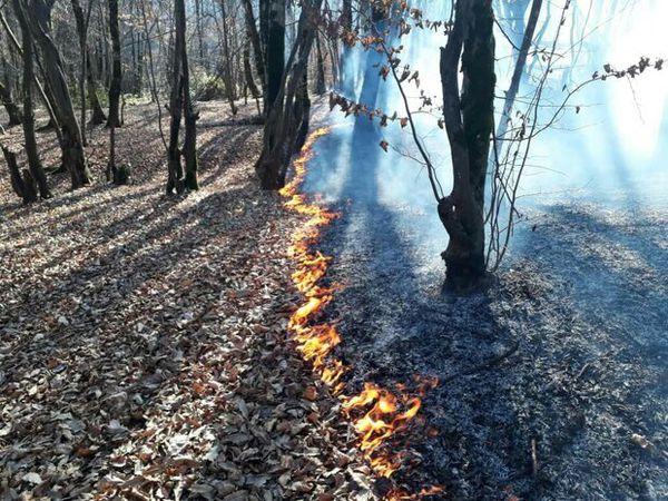 آتش سوزی در النگدره/ ۱.۵ هکتار از اراضی جنگلی دچار حریق شد