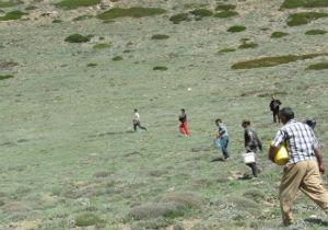 کودپاشی مراتع آزادشهر