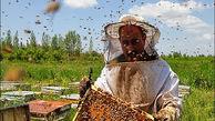 لزوم تهیه مجوز کوچ بین استانی برای زنبورداران