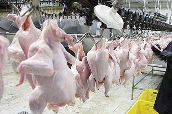 رکورد بی سابقه کشتار مرغ در گلستان/۳۵۰ هزار قطعه طی یک شیفت کاری