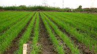 کاهش مصرف آب در شالیزارهای گلستان با خشکهکاری برنج