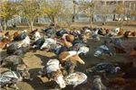 حیوانات مهربانی که به اقتصاد سیمین شهری ها کمک می کنند