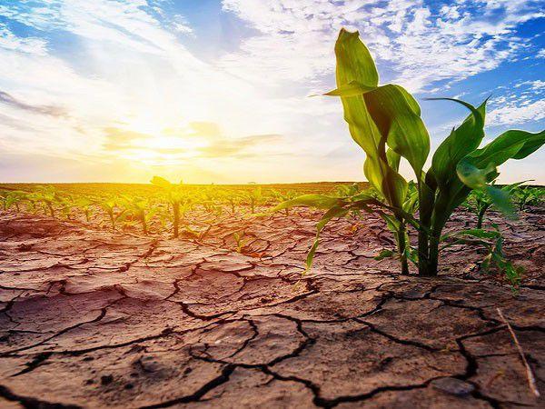 خشکسالی به یک سوم محصولات کشاورزی گلستان خسارت زد