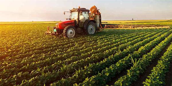 ضرورت بهبود وضعیت بیمه محصولات کشاورزی
