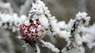 توصیههای هواشناسی به کشاورزان تا ۲۵ بهمن/هشدار بارش سنگین برف