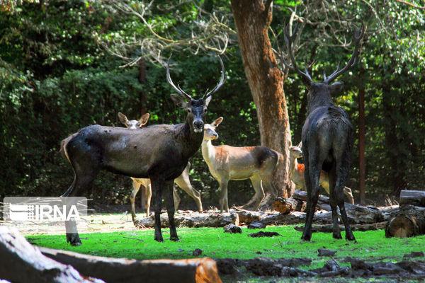 امسال پارک ملی گلستان ۱۲۰ میلیارد ریال بودجه دارد