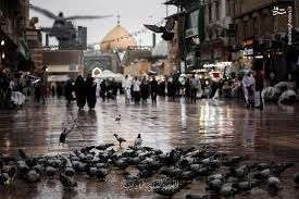 فیلم/ بارش باران به وقت دلتنگی حرم امیرالمومنین(ع)