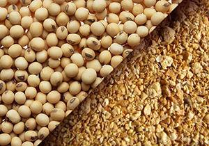 آغاز توزیع بذر سویا در استان