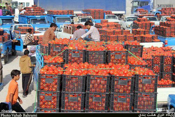 قیمت گوجه فرنگی به ۶ هزارتومان رسید