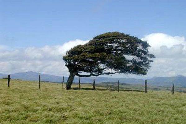 احتمال وزش باد در گلستان