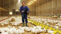 افزایش قیمت نهادهها علت گرانی مرغ و تخم مرغ در گلستان