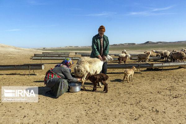 عشایر کشور سالانه ۲۰۰ هزار تن گوشت قرمز تولید میکنند