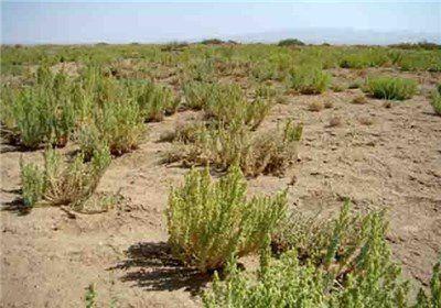 مراتع استان گلستان با بحران کمآبی مواجه است