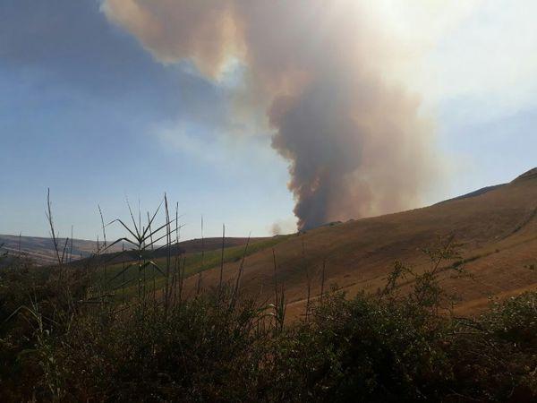 تصاویر/ آتش مزارع به جنگل های بخش پیشکمر سرایت کرد