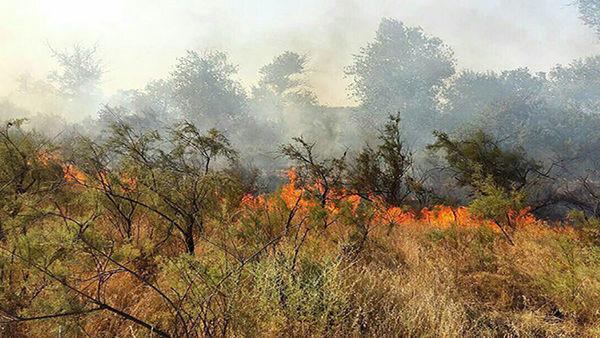 پنجه آتش بر پیکر توسکستان/ نبرد با آتش با دستان خالی