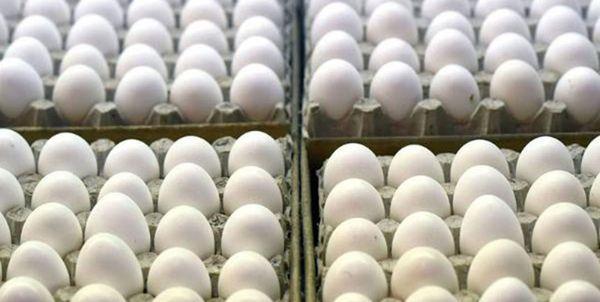 گرانتر شدن تخممرغ مشکل صفهای طولانی را حل کرد/ نقش «دلال» موفقتر از ستاد تنظیمبازار
