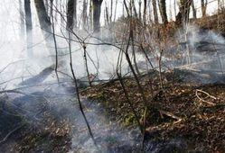 جدیدترین خبرها از آتش سوزی پارک ملی گلستان