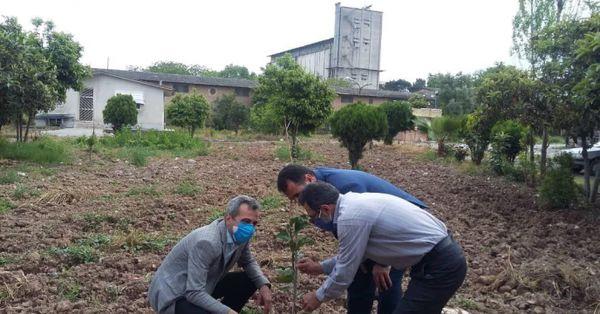 نگهداری و مراقبت از نهال های غرس شده انبار سازمانی گرگان در گلستان