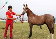 تصاویر/ اسبهای سردار آزمون گل کاشتند