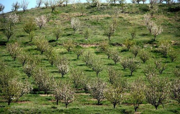 تبدیل ۲ هزار هکتار اراضی شیبدار به باغ نیازمند ۵۹ میلیارد ریال اعتبار است