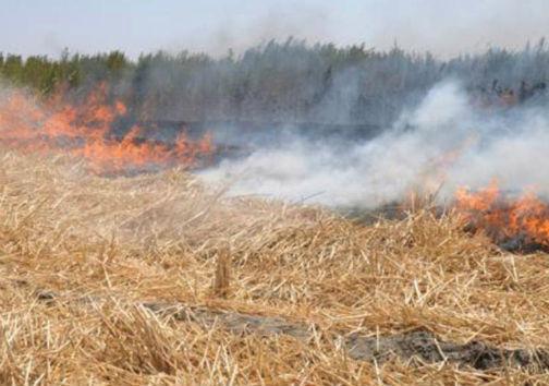 برخورد جدی با آتش زنندگان بقایای کشاورزی