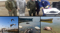 یکه تازی تک سلولی مخوف در خلیج/پرندگان قربانی بوتولیسم میشوند