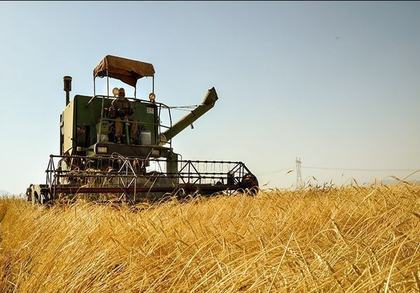 120 هزار تن گندم از مزارع آق قلا برداشت می شود