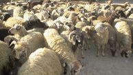 سهم عشایر از سبد تامین پروتئین استان گلستان مشخص شود