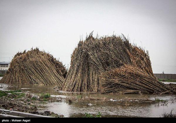 هشدار کشوری هواشناسی به کشاورزان برای مراقبت از محصولات