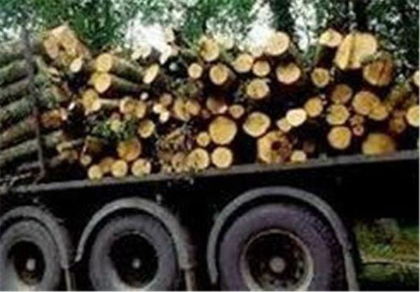 افزایش ۳۰ درصدی کشف چوب قاچاق از ابتدای سال جاری
