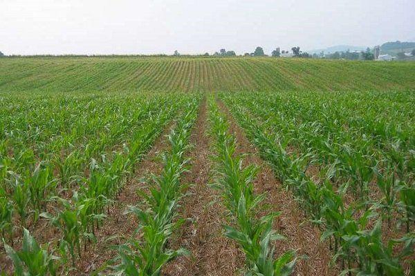 هشدارهای هواشناسی به کشاورزان تا آخر هفته