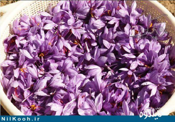 واگذاری مجوز فعالیت 4 واحد بسته بندی زعفران در گلستان