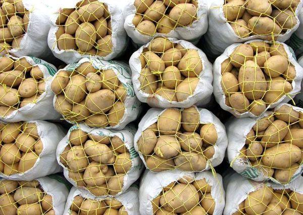 ورود تعاون روستایی گلستان به خرید حمایتی سیبزمینی