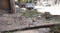 قطع 4 درخت سبز برای رخنمایی ساختمان/ محیط زیست قربانی کامجویی اقتصادی