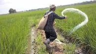 ۱۳۰ هزار تن کود در بین کشاورزان آق قلایی توزیع شد/ شیوع بیماری های قارچی در مزارع گندم و جو