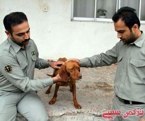 عامل ضرب و شتم سگ شکاری توسط محیط زیست گلستان دستگیر شد
