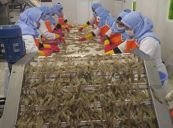 نخستین محموله میگوی صادراتی گلستان به چین رسید