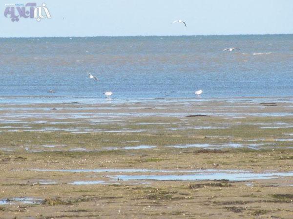 سواحل گلستان موجب ناامیدی گردشگران شد/مسئولین کشور فکری به حال سواحل استان کنند
