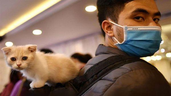 هشدار سازمان جهانی بهداشت: ارتباط با حیوانات خانگی را محدود کنید
