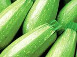 برداشت ۸۰ درصدی کدو سبز در گلستان