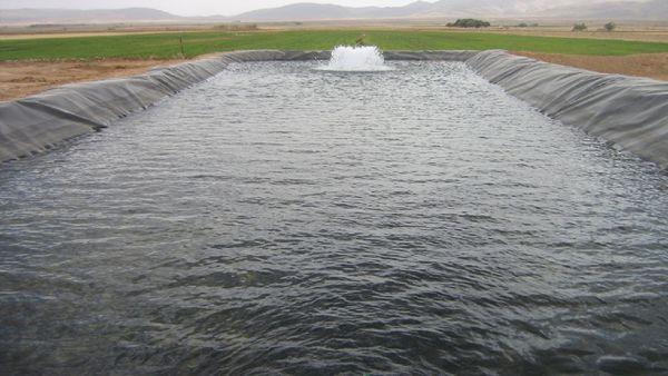 یک تیر و دو نشان کشاورزی و پرورش ماهی در گلستان