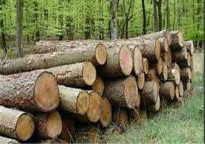 دستگیری قاتل درختان جنگلی رامیان
