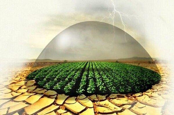 ۲۲۶ هزار هکتار از اراضی زراعی گلستان تحت پوشش بیمه محصولات کشاورزی هستند